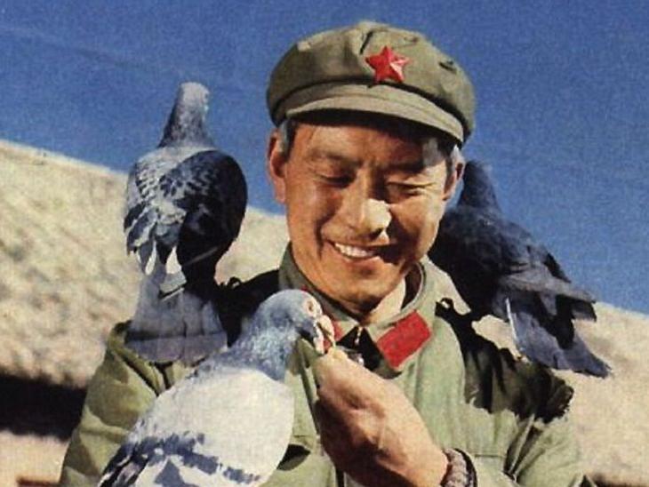 中国军人与鸽子的故事