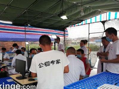 贵州红枫小棚清棚5949羽