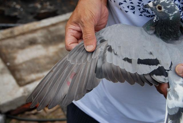 问答:肱骨和翅膀的鉴赏问题