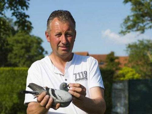 比利时大名家喜获丰收 鸽王冠军配对开出天价