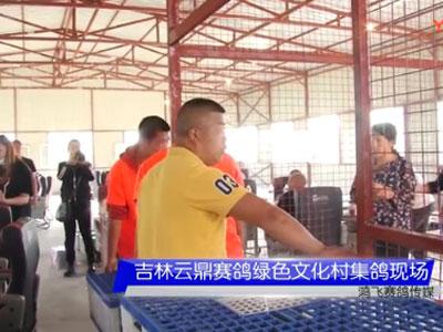 视频:吉林云鼎VIP寄养棚联