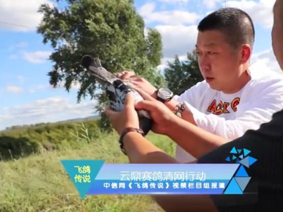 高清视频全记录:吉林云鼎赛鸽