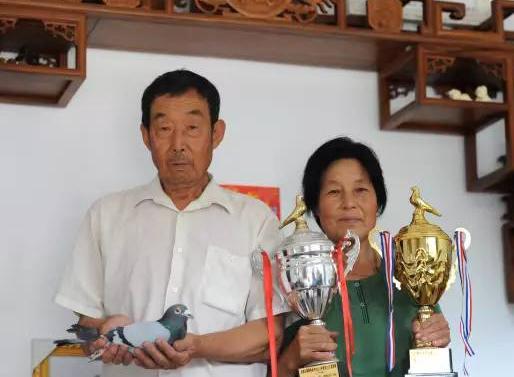 """媒体报道六旬养鸽夫妻档:""""少而精""""培养更多冠军鸽"""