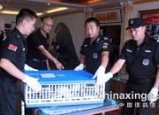 北京开创者千元特比鸣枪 154家鸽舍归巢率94%