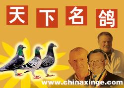 名人名鸽荟萃:鸽友心中的偶像 养鸽路上的明灯