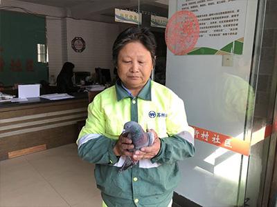 受伤信鸽险被猫攻击 爱心环卫工施救寻主人