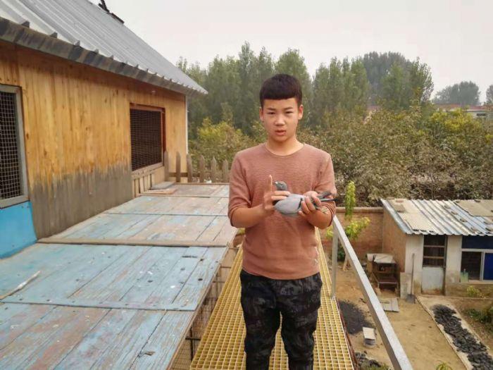 北京丰台鸽会短距离高速归巢 前十风采照出炉