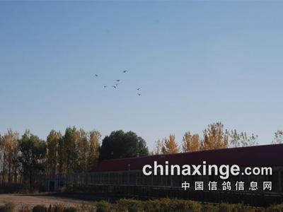 全程记录:吉林省大安信和公棚