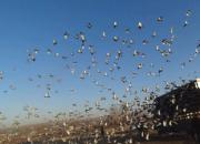 亲临现场:唐山鸽会500公里背后的故事