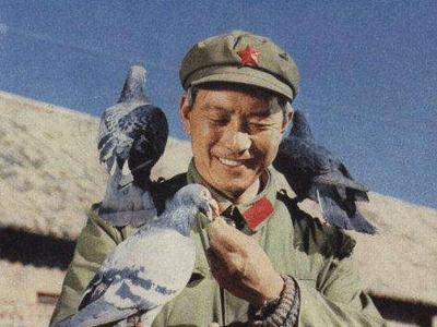 听陈文广老前辈讲故事:军鸽的品种