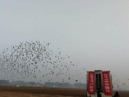 北京百鸽园第三关前十名验棚图片