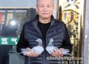 《老庄说鸽》:我的养鸽三十六计之背水一战