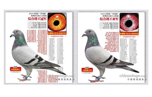 神鸟来了!北京开创者四关鸽王