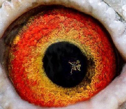 点眼丛是一种病态如同人类的白