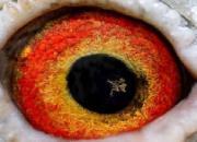 点眼丛是一种病态如同人类的白内障