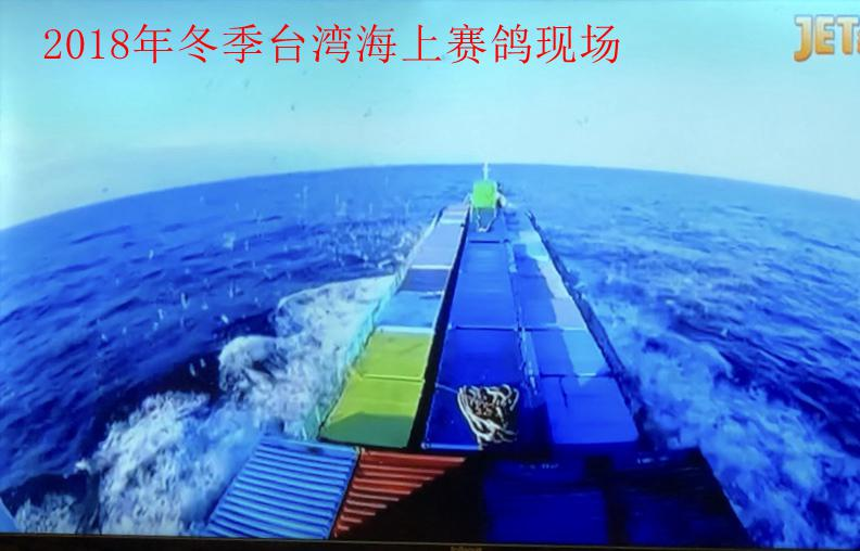 台湾冬季海翔信鸽比赛见闻 赛