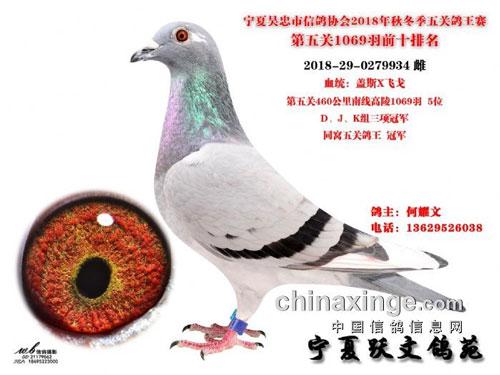 吴忠市第五关总决赛前十名优胜鸽鉴赏