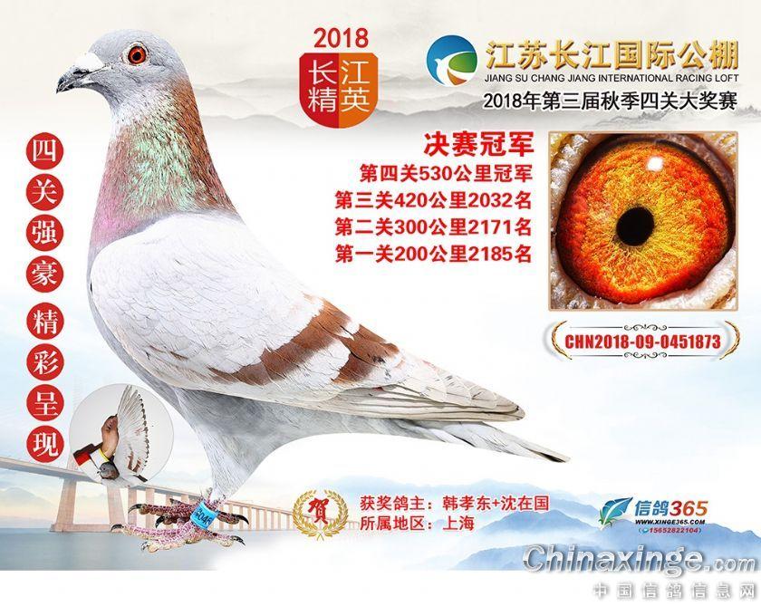 江苏长江公棚多关优胜鸽出炉 冠军闪亮登场