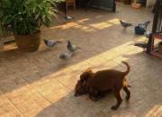 遛狗的比养鸽的更有面子?