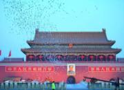 万鸽飞舞冬雪纷飞 一大波鸽界美景图来袭
