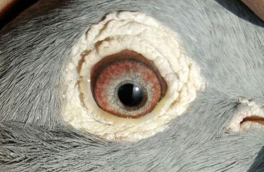 砂眼能不能配砂眼?