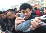 媒体报道恩城鸽子会:观赏鸽降价厉害 信鸽水涨船高