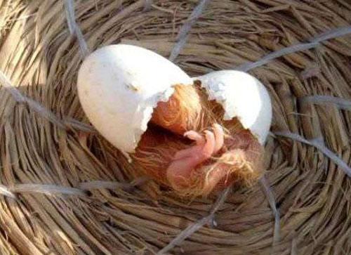 沾有粪便的蛋都要淘汰 为啥?