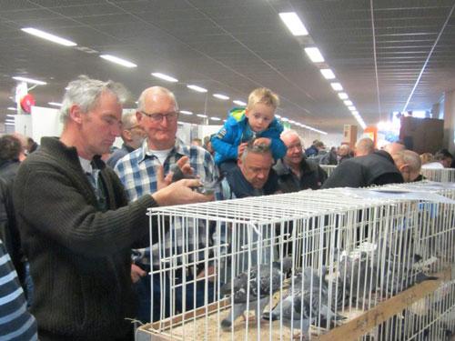 荷兰春季国际鸽展开幕 主打幼鸽展销