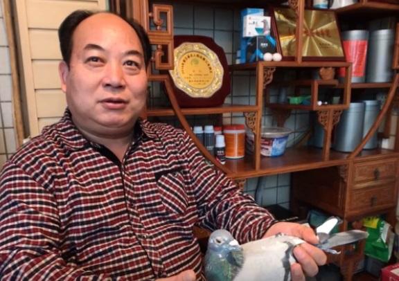 我为鸽狂:专访大明宫鸽业马利平