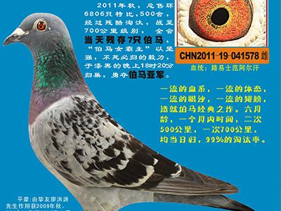 陈英杰老师语音授课(6)中国赛鸽强国,谁说了才算?