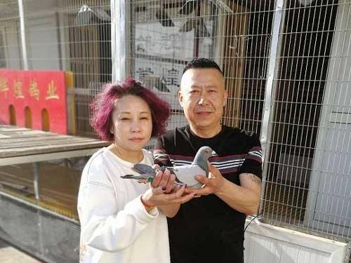 两度夺取北京全市总冠军 辉煌鸽业梁国强视频专访