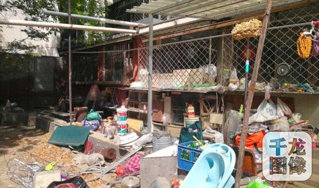 邻居投诉致鸽棚被拆 鸽友表示