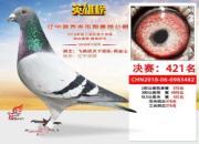 看鸽不能单看眼 好赛鸽未必是好种鸽
