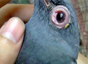 实测记录:单眼伤风的治疗药物