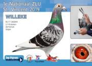 圣维仙千公里大赛 荷兰赛鸽表现惊艳