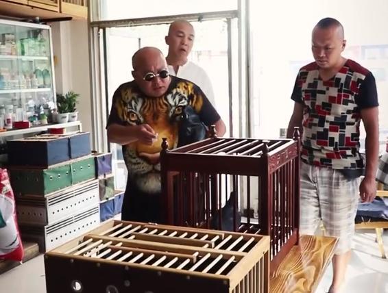 视频:心系赛鸽正能量情景短剧