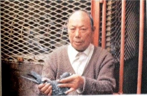 与李鸟齐名的长距离霸主:中国名系吴淞鸽