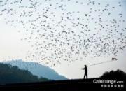 一大波鸽界精彩图片来袭 第七张图亮了