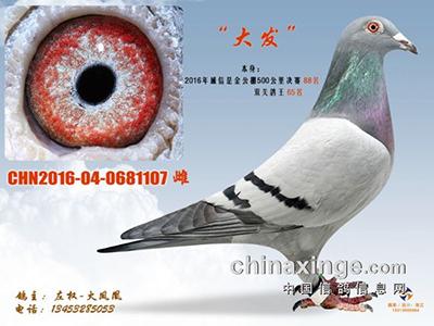 秋季信鸽管理注意事项