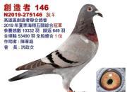残酷海翔!台湾五万多羽全船总冠军欣赏