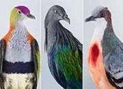 风度翩翩观赏鸽 第一只的发型太酷了