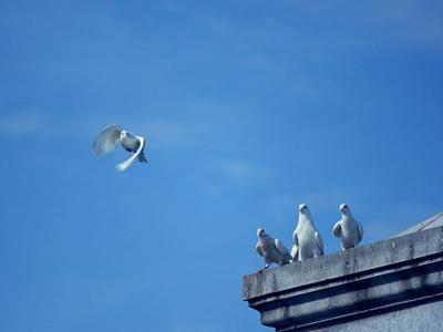 训放有感:等鸽是一种养生