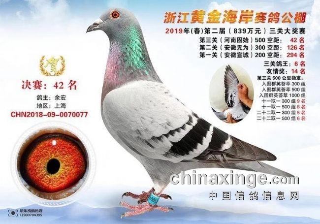 访上海余宏:赛鸽需要勇气更需