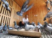 带着我的鸽子上天安门广场!