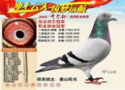 中国赛场的印钞机――传奇金母110