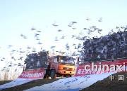 积雪云端 惊鸿在天 天野赛鸽决战新民