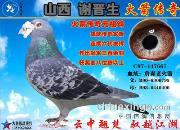 《山西谢晋生火箭传奇家族列传》:四大金刚之传奇名鸽老火箭66