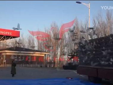 强强对抗!天津兆宇通三大公棚联翔赛圆满完赛