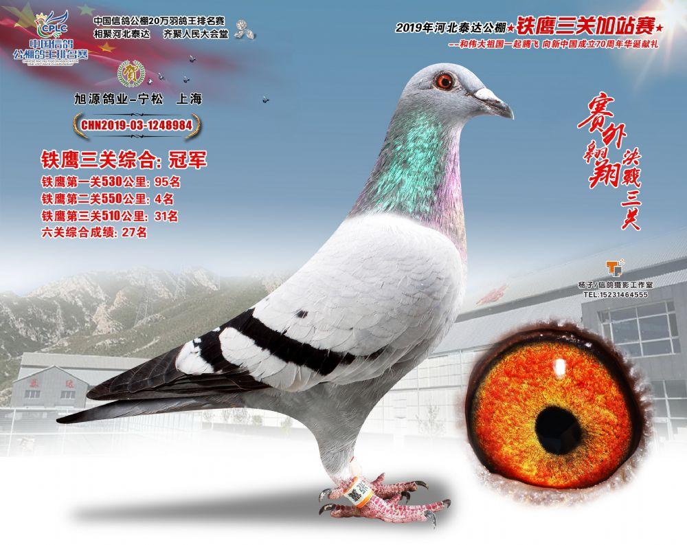 六关铁鹰鸽王品质高 河北泰达2020年秋赛火热预定中