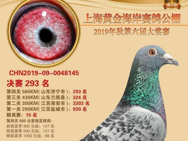 三虎一彪――2019上海三虎鸽舍公棚战绩大满贯随记